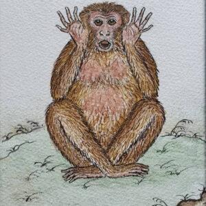 Le singe (2)